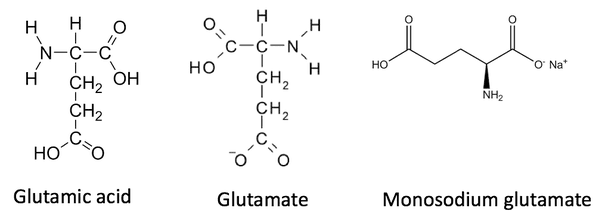 MSG chemical structure