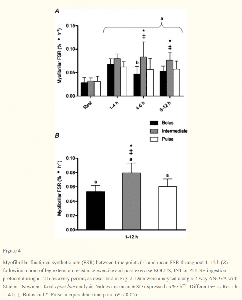 muscle protein synthesis rates